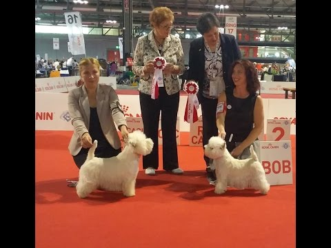 World Dog Show 2015, Westies, FINAL, Video by Westie.lv