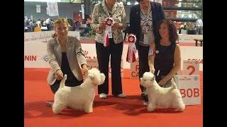 World Dog Show 2015, Westies, Final