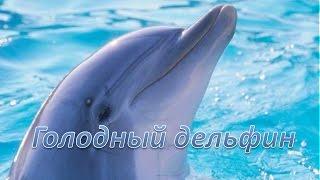 Лучшие места на Черном море. Голодный дельфин(Видеоплатформа