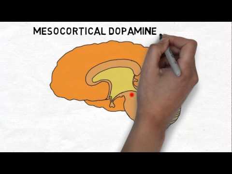 2-Minute Neuroscience: Reward System