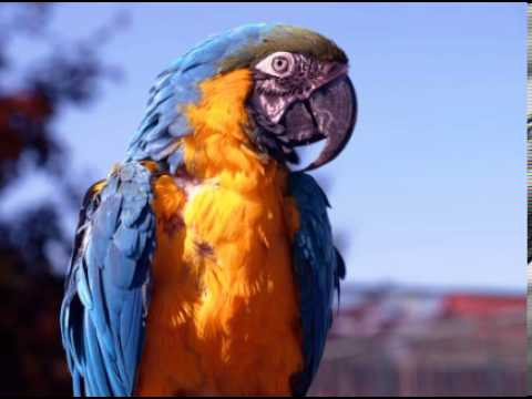 Parrot Facts - Facts About Parrots - YouTube