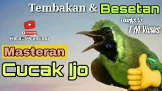 Download Mp3 Cucak Ijo Gacor Full Isian, Jadikan Isian Cucak Ijo Mu Seperti Ini