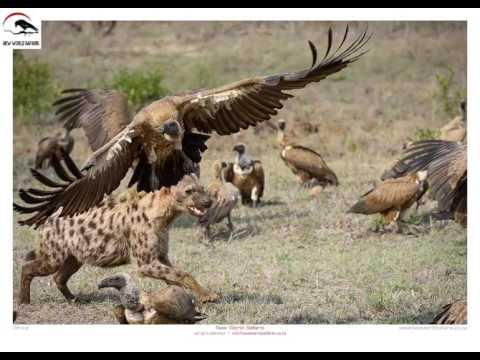 New World Safaris - Wildlife (General)