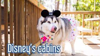 Disney Pet Friendly resort   Fort Wilderness day 1
