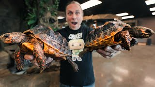 FIRST NEW ANIMALS FOR THE REPTILE ZOO BUILD!! day #4 | BRIAN BARCZYK