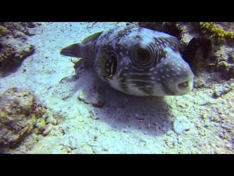 red sea diving adventures with Camel dive ,sharm el shiekh