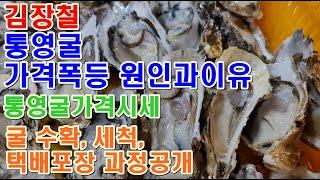 김장철 통영굴 가격폭등원인과이유 통영굴 생산자직거래 수…