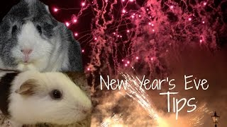 How To Make Guinea Pigs Feel Safe | New Year