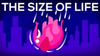 Download What Happens If We Throw an Elephant From a Skyscraper? Life & Size 1 Mp3 and Videos
