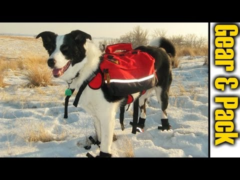 Kado's Pack & Gear - Hiking With Dogs