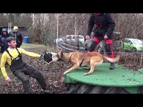 how-to-train-a-dog-for-schutzhund-!!!-promo