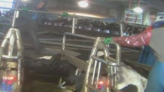 Shocking video: Cows beaten, hanged and whipped at Canadian dairy farm