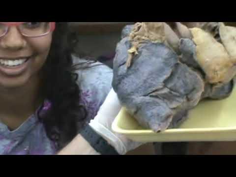 anatomy tutorial (apr 28) pt 8 of 12