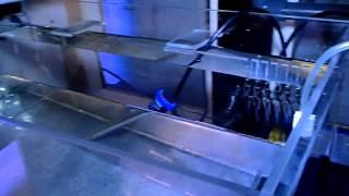 Elos Style Rimless Starphire Aquarium