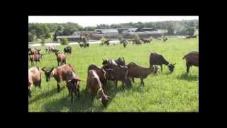 présentation de la ferme de Romecrot et du GAEC COUET et fils