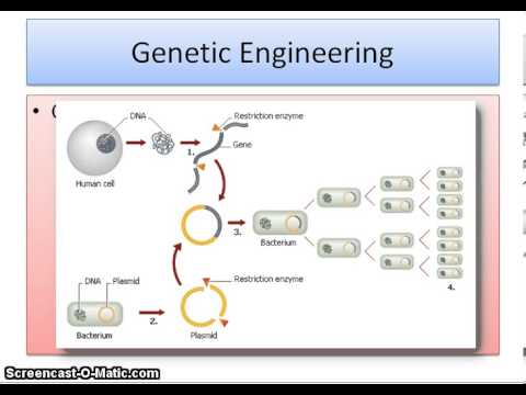 selective breeding and genetic engineering essay Genetic engineering allows scientists to transfer genes from one organism to an organism of a different species and in selective breeding organisms within the same.