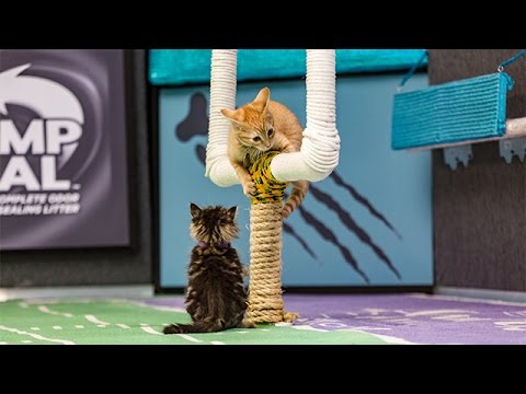 The Bengals Big 4th Down _ Kitten Bowl III