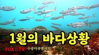 수중다큐/바다상황/프리다이빙 freediving-FOX…