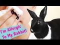 How to Cope with Rabbit Allergies