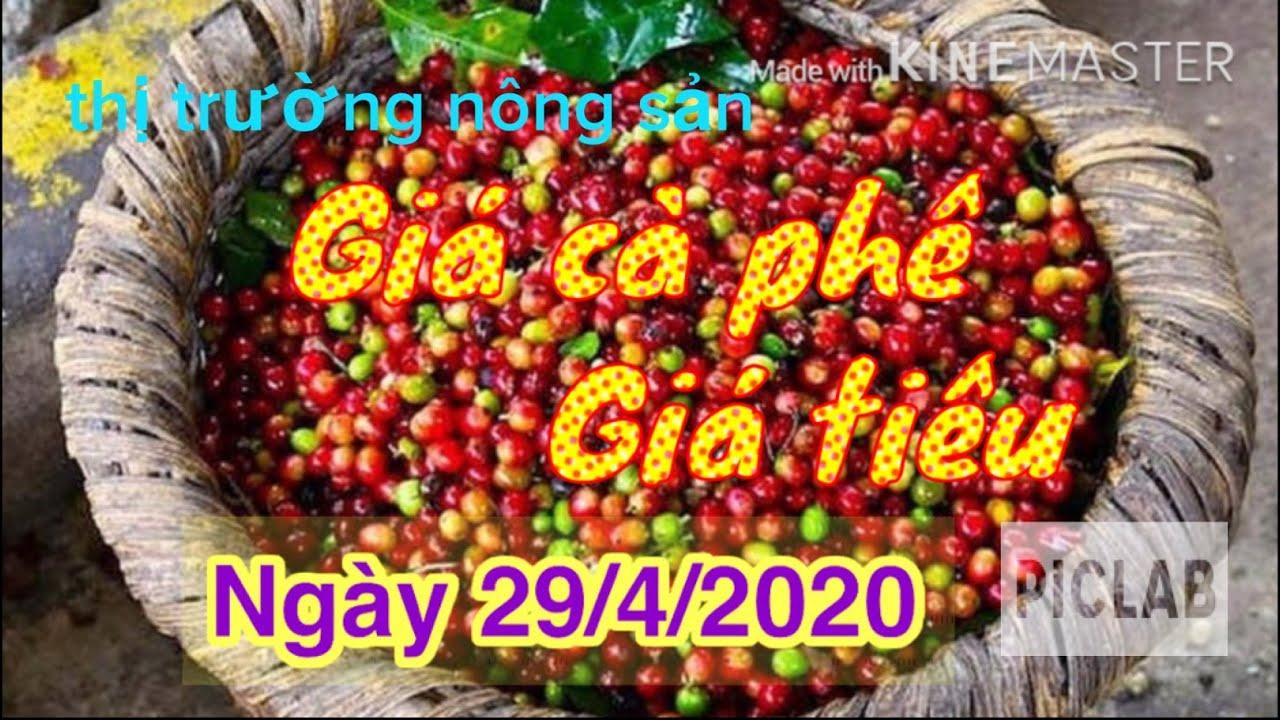 Giá cà phê hôm nay, giá tiêu ngày 29/4/2020.giá cà phê tăng vọt🔹cao hiếu vlogs