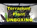Terrarium Plant Unboxing - Understory Enterprises