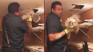 Firefighters Rescue Small Dog Trapped in Wall of Virginia Home