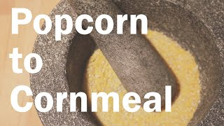 How to Make Corn Meal from Popcorn (and a Cornbread)   Flavor Lab