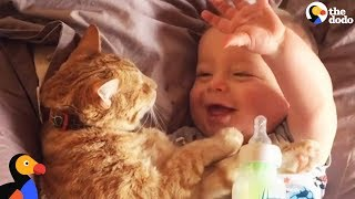 Cats and Kids Playing, Cuddling and Growing Up Together | The Dodo