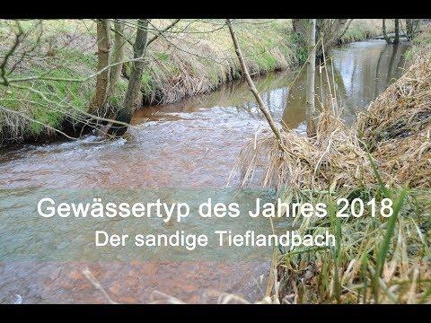 Gewässertyp des Jahres - Der sandige Tieflandbach