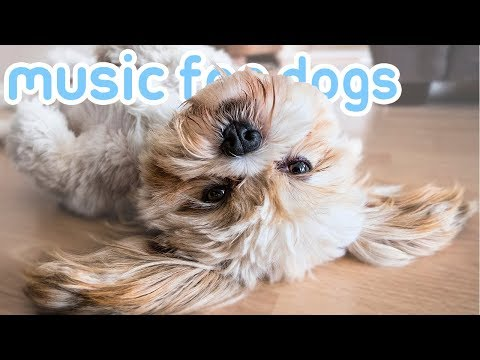 New Years Eve Music! Music To Keep Your Dog Calm During NYE Fireworks!