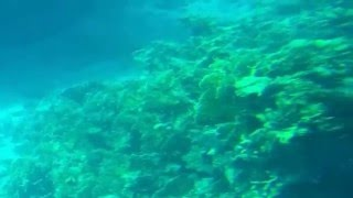 Red Sea Corals, Egypt - the water underlife for divers