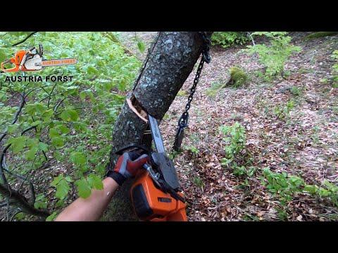 Gefährliche Waldarbeiten Nach Sturm