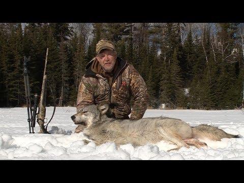 Ontario Wolf Hunt - Fred Eichler