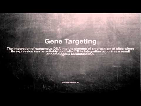 Medical vocabulary: What does Gene Targeting mean