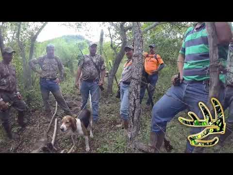 Cacería de Venado con perros OrejasDeOro