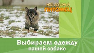 Теплая одежда и аксессуары для собаки. Советы по выбору материалов и моделей