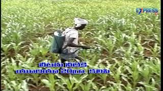 Maize Management - Express TV