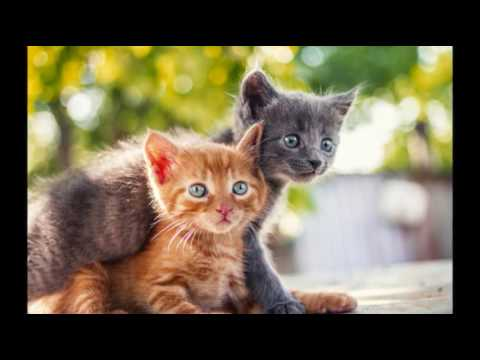 Coronavirus in Cats | Cat Care Tips