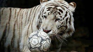 Oroszország egy héttel a foci-vb rajtja előtt