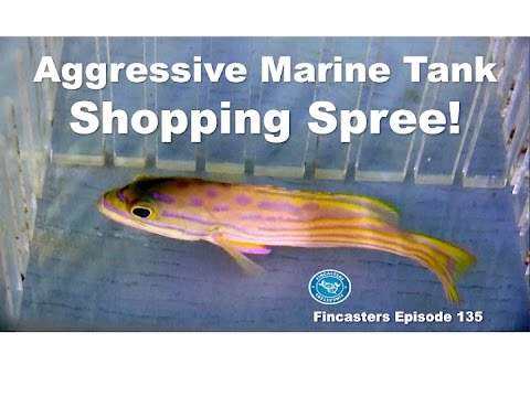 Aggressive Marine Tank -- Shopping Spree Fincasters Episode 135
