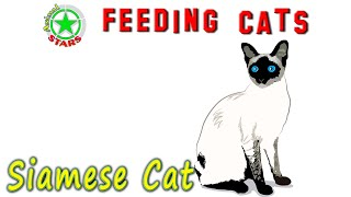 Feeding Siamese Cats And Kittens. Siamese food    How To Feed Your Cat Correctly Siamese cat food