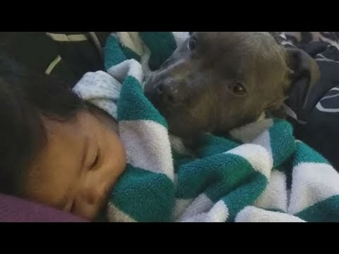 Dog Runs Into Babys Room Before Making A Frantic Move That Leaves Her Family In Tears