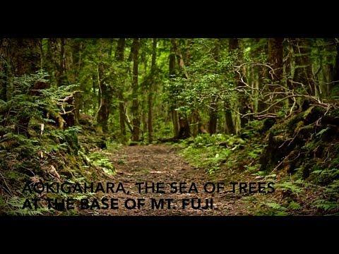 Inside Japan's Suicidal Sea of Trees