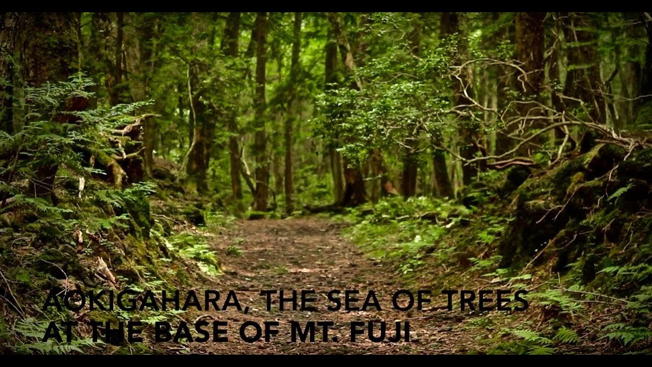 Inside Japan's Suicidal Sea of Trees