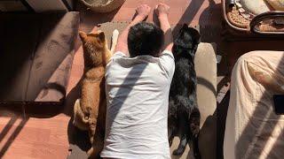 光合成中の3匹が可愛すぎて興奮した Basking in the sun with dog and cat