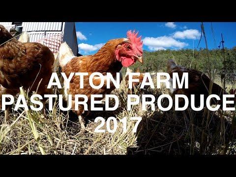 Travel Diary #7 - Ayton Farm 2017 (Pastured Chicken and Egg Farm)