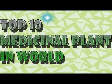 TOP 10 MEDICINAL PLANTS IN THE WORLD AND THIER USES
