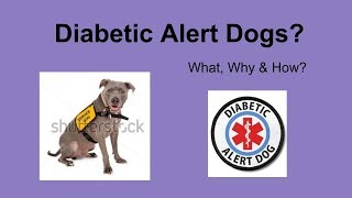 Getting a DIABETIC ALERT DOG - the process