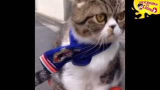 Приколы с котами Подборка приколов с котиками Приколы COUB Выпуск 132