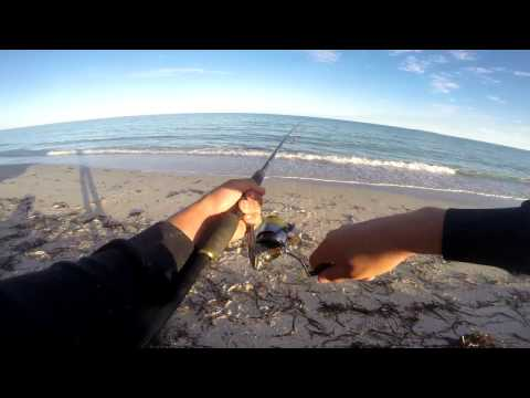 Silver Whiting Fishing From The Beach